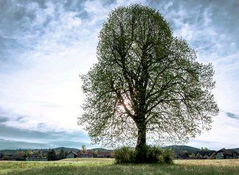 Zgodbe dreves, ki niso le za les