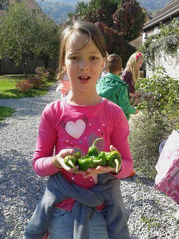 Šolski vrt osnovne šole Borovnica