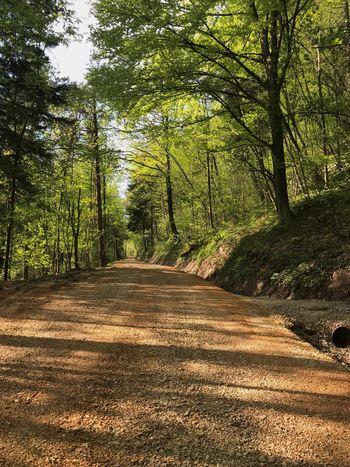 Obnova gozdnih cest v občini Borovnica