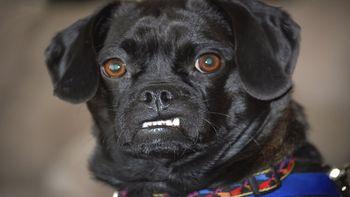 Prejeli smo: Nevzgojeni psi vznemirjajo občane
