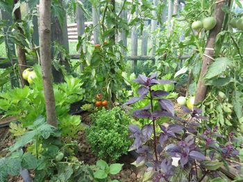 Plantellini vrtnarski nasveti: Sreča je – samooskrbno vrtnariti