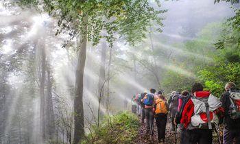 Sončki na Sveti planini v Posavskem hribovju