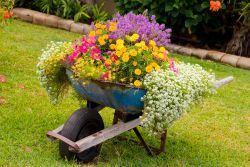 Najlepši cvetoči vrt v Mirnu