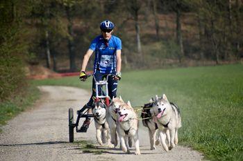 PRESTAVLJENO na 18. oktober: Hraše: 8. Memorial Henrika Sečnika / Mednarodno tekmovanje vlečnih psov