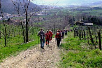 Pohod Med vrhpoljskimi vinogradi 2018