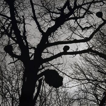 JAVNO VODSTVO po razstavi Andreja Perka: Mi hočemo živeti z umetnikom