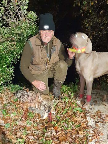 Šakal v lovišču Lovske družine Polzela