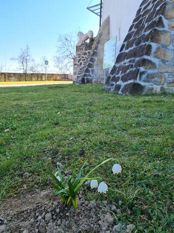Na gradu Komenda se prebuja pomlad