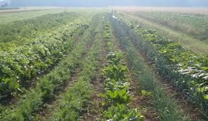 Vabilo na srečanje »Možnosti pridelave zelenjave in sadnih vrst«