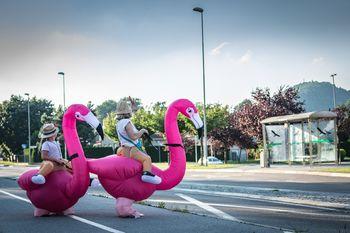 Par plešočih flamingov prinesel veselje in dobro voljo na Polzelo