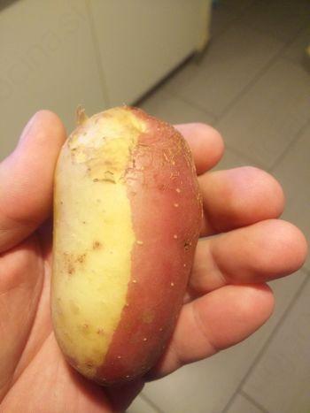 Albino krompir v Beli