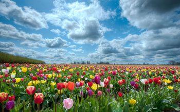 Naš vrt in opravki v aprilu ter maju!