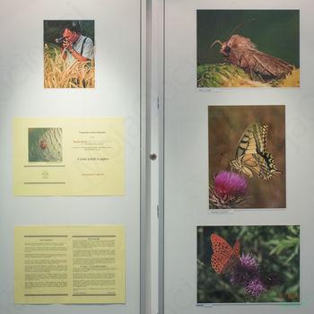 V svetu žuželk in pajkov , fotografska razstava Bogdana Briclja , KMF FZS, EFIAP/g, EPSA