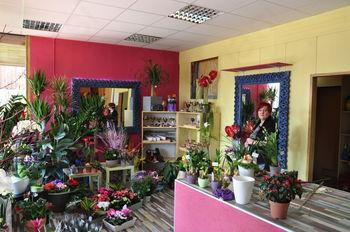 Pestra ponudba v novi Zreški cvetličarni