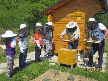 V šolskem čebelnjaku se dogaja