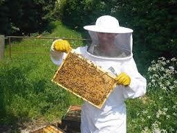 Izjava za javnost: Dan odprtih vrat slovenskih čebelarjev