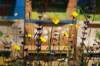 Pred vrati 11. Mednarodni festival alpskega cvetja