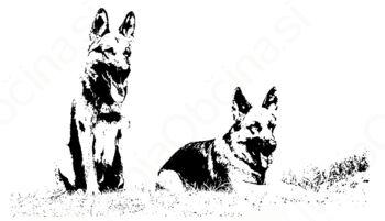 Jesenski tečaji šolanja psov