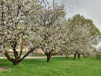 Tako cveti naša pomlad
