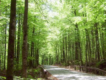 Minister Židan in Zveza društev lastnikov gozdov