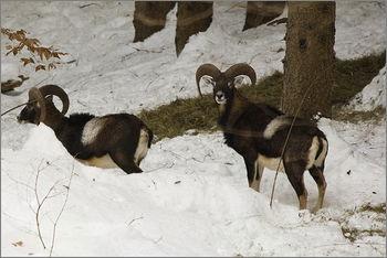 V poletnih mesecih lovci LD Poljčane poskrbimo za zimsko prehrano divjadi!
