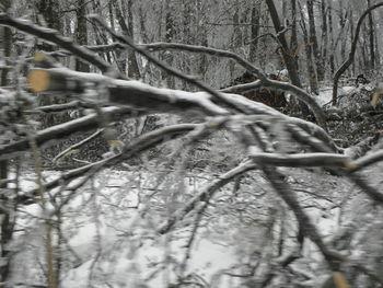 Prijava škode v gozdovih do 12.marca