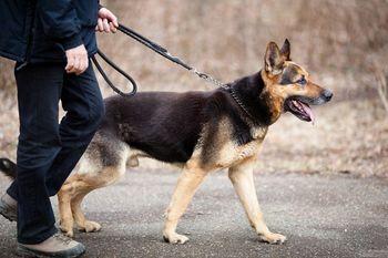Poostren nadzor nad vodenjem psov na javnih površinah