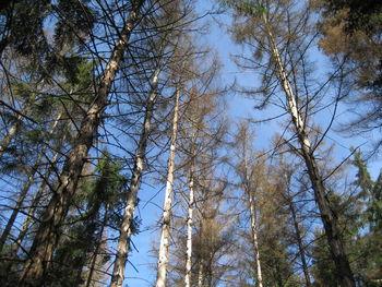 Poziv lastnikom gozdov - napad podlubnikov
