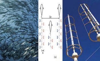 Ribe nas učijo kako bolje izkoriščati energijo vetra