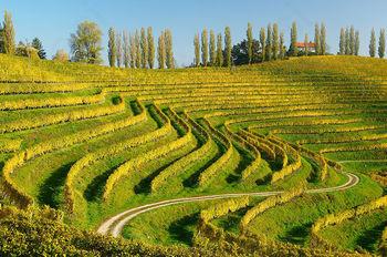 20 uspešnih let Društva vinogradnikov in sadjarjev Haloze