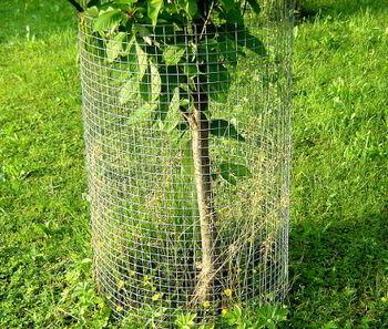 Varovanje dreves, vinogradov in drugih rastlin pred divjadjo