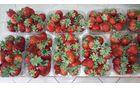 Rdeče jagode v košaricah