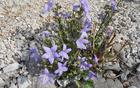 Ob poti je bilo precej jesenskega cvetja