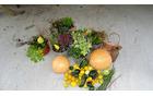 Jesenske zasaditve (foto: Stane Markovič)
