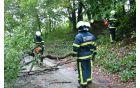 Intervencija september 2010: Odstranjevanje podrtega drevesa pod Boštanjem.