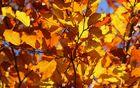 1755_1506600637_leaf-2012_1920.jpg