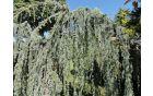 Mini arboretum. Foto: Lea Širok