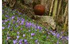 V parku se prebuja pomlad Foto: Primož Kožuh