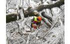 Odstranjevanje porušenih dreves je bilo izjemno nevarno. Foto: Dora Ravnik