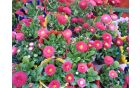 Cvetlični lončki