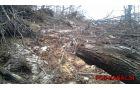 Veliko dreves je bilo podrtih. Foto: Igor Komac