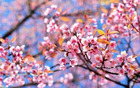 2307_1490268800_pomlad_copy2.jpg