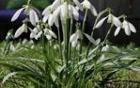2590_1490013211_pomlad.jpg