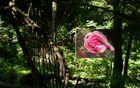 Vrtnice v Parku Pečno; Foto: Primož Kožuh