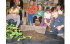 Sajenje okrasnih rastlin