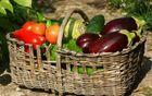 Predavanje \'Zdrava zelenjava je osnova za dober pridelek\'