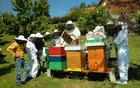 Skrbimo za zdravo čebeljo pašo