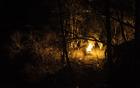 pokop pusta; foto: Matjaž Gusak