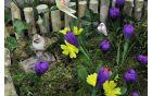 Znanilci pomladi.