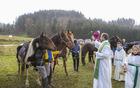 Na martinovo so bili v ospredju živi konjički (jekleni v ozadju).